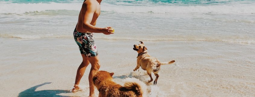 A happy man plays on the beach with his dogs